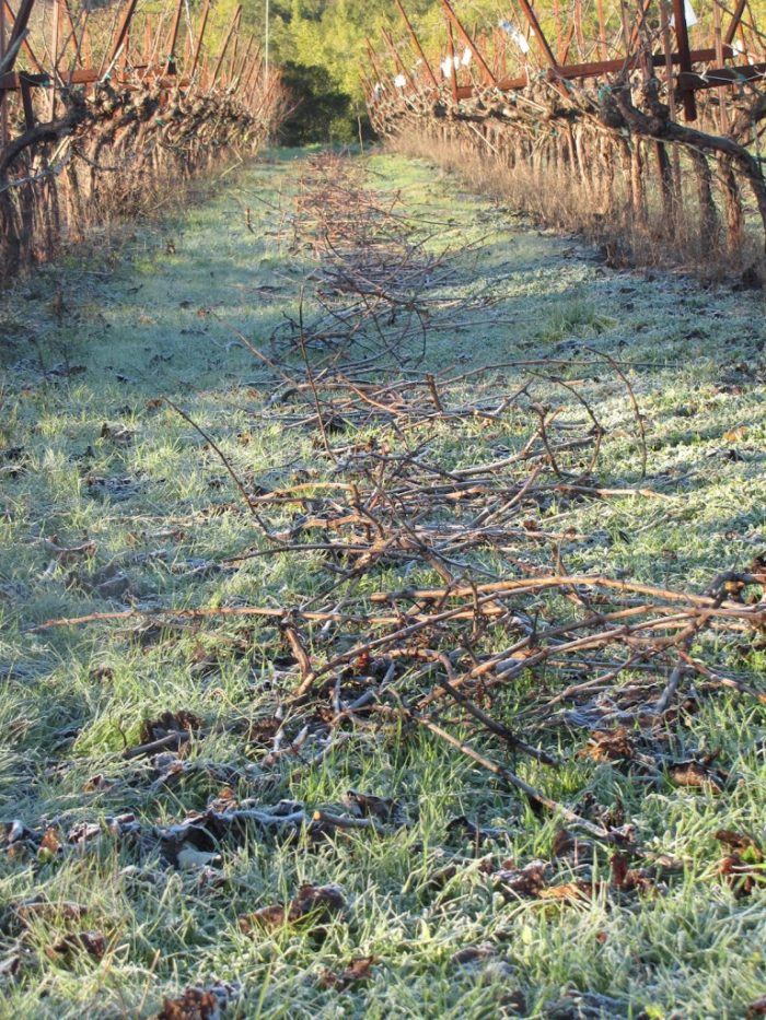 Pruning and Winter Light