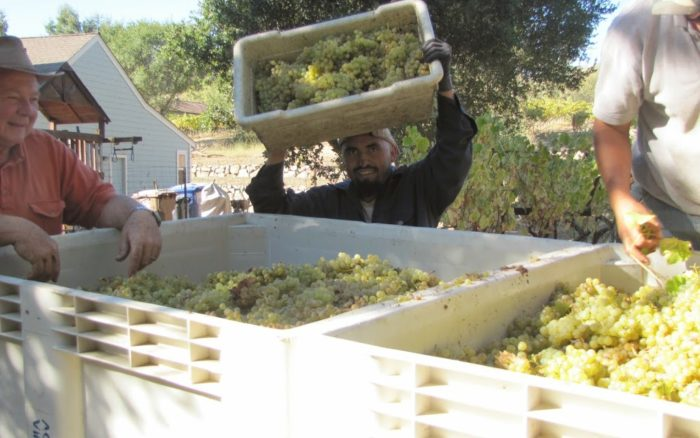 Grape Harvest Over, Two to Go!