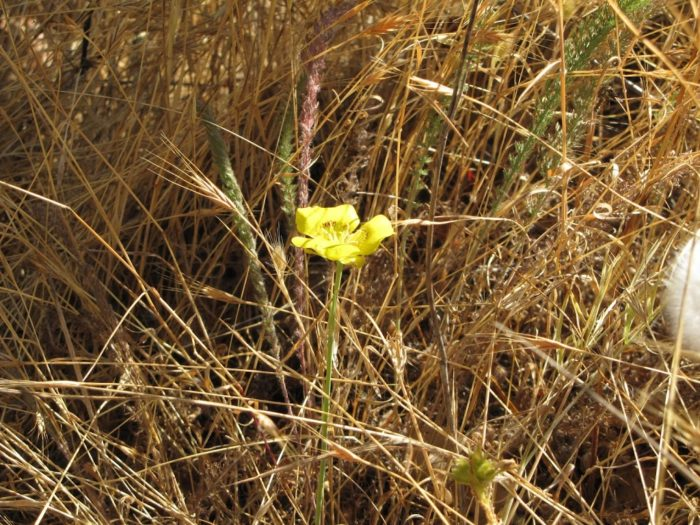 Natural Ecosystems and Diversity: What's Blooming